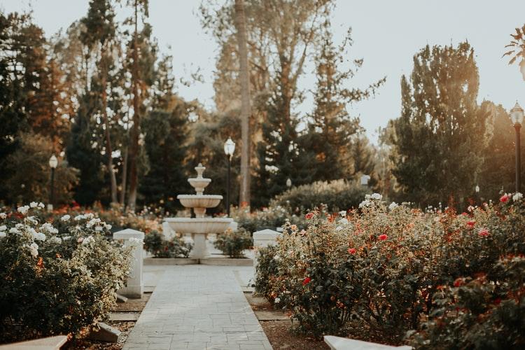 Rola roślin w przydomowym ogródku